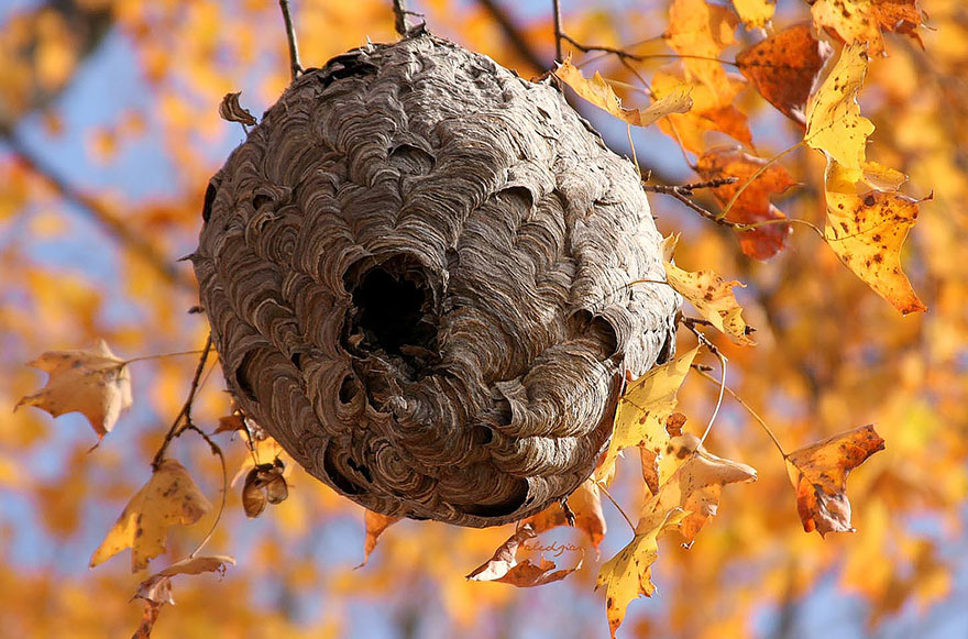 animal-architecture-nests-9-1