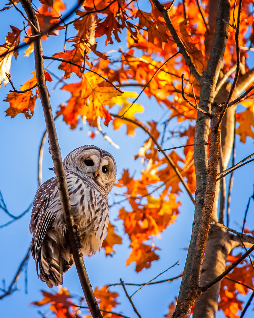 autumn owl treat fall - photo #12