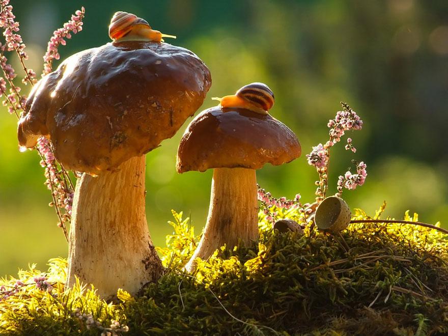 Snails Enjoying Sunlight Atop Mushrooms