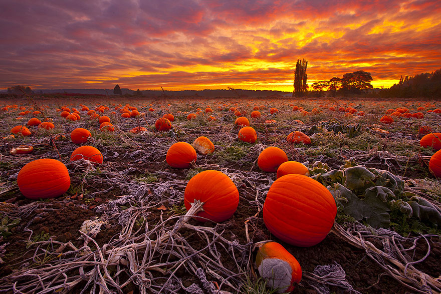 cinderella pumpkin designs