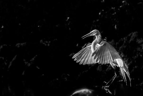 Malefica Heron