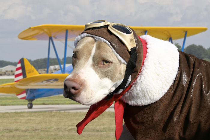 Aviator Kosmo