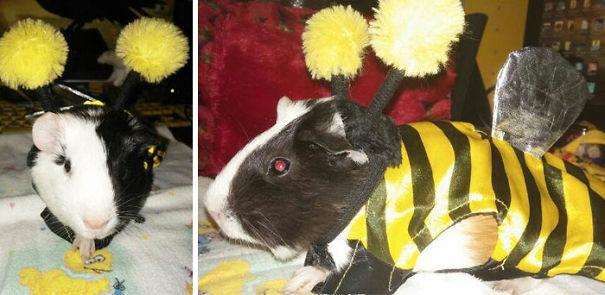 Phantom My Little Bumble Bee