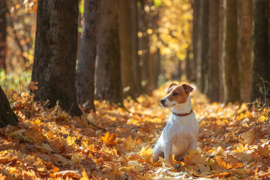 Autumn's Happy Dog