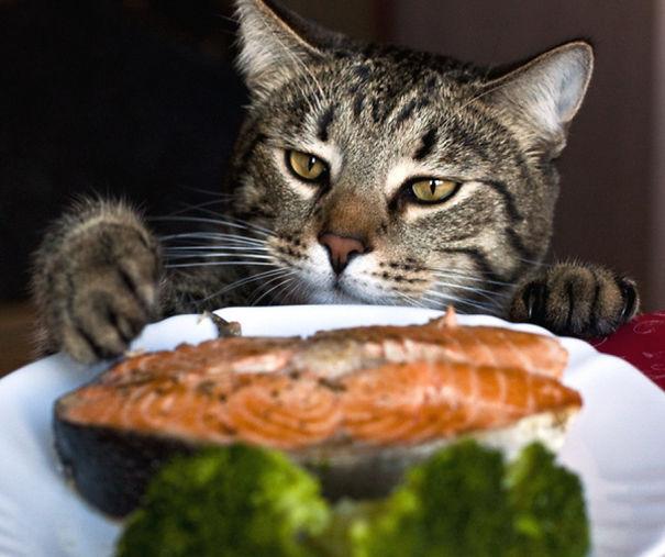 Salmon Thief