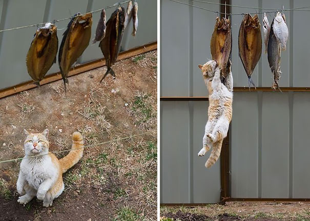 cat-thief-funny-animal-pictures-334__605 - Thieving Paw strikes again - Photos Unlimited