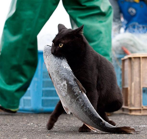Kitty And His Prey