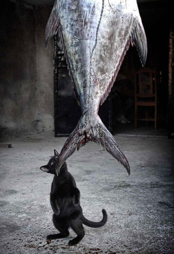 cat-thief-funny-animal-pictures-38__605 - Thieving Paw strikes again - Photos Unlimited