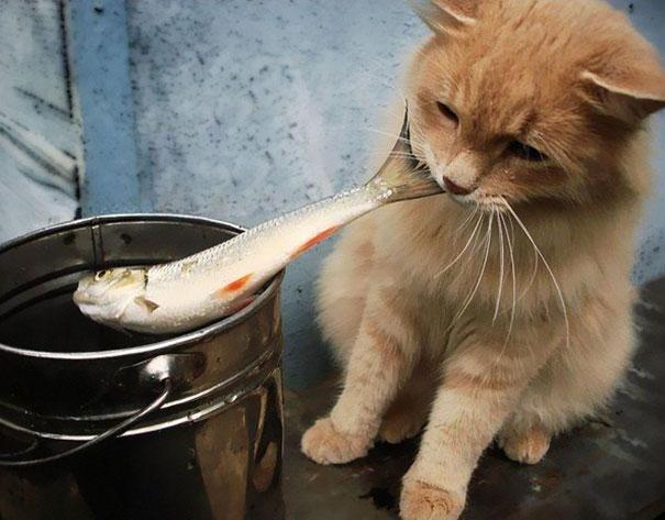 Fish Thief