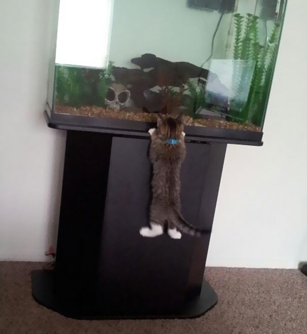 cat-thief-funny-animal-pictures-46__605 - Thieving Paw strikes again - Photos Unlimited