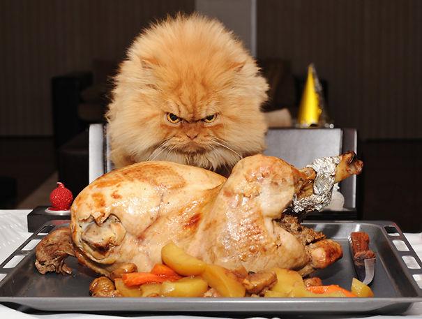 Chicken Thief