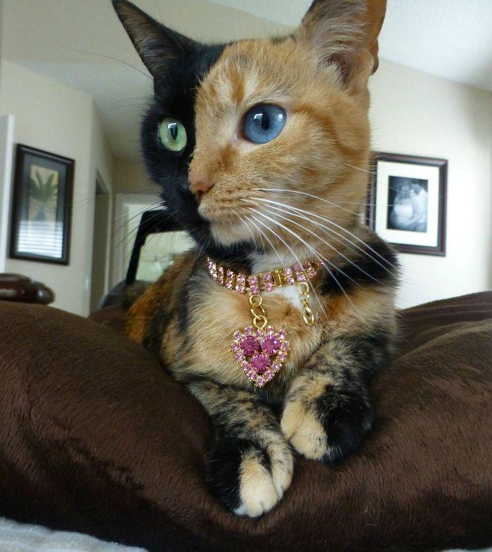 Venus The Chimaira Cat