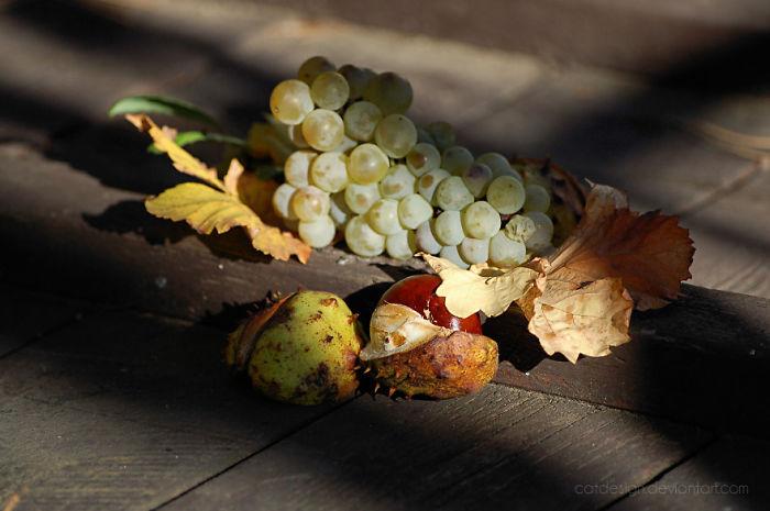 Autumn Still-life