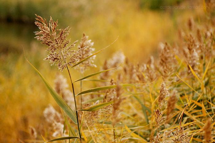 Autumn Colours Ii.