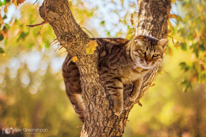 Climb A Tree, They Said…