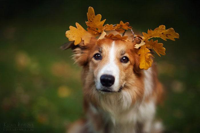 dog-photography-ksenia-raykova-52
