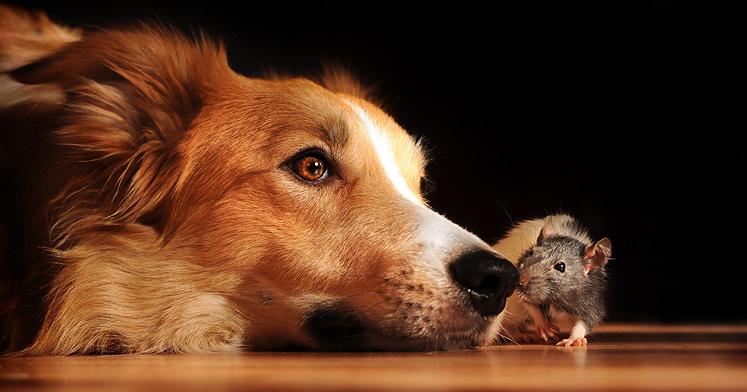 Playful Dog Portraits By Russian Photographer Ksenia Raykova