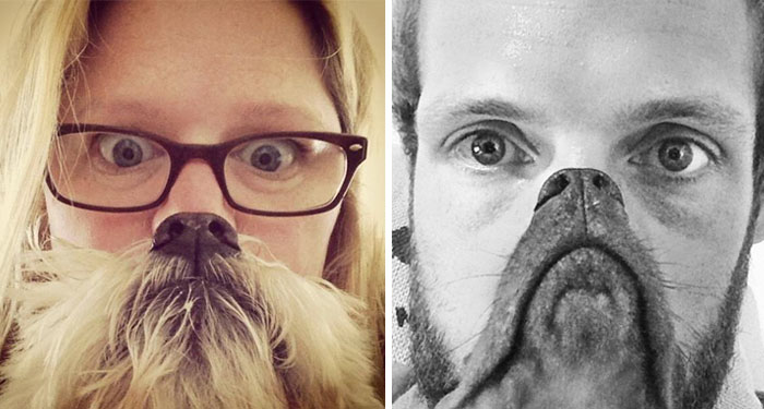 Could You Do Better Than These Dog Smile Selfies?