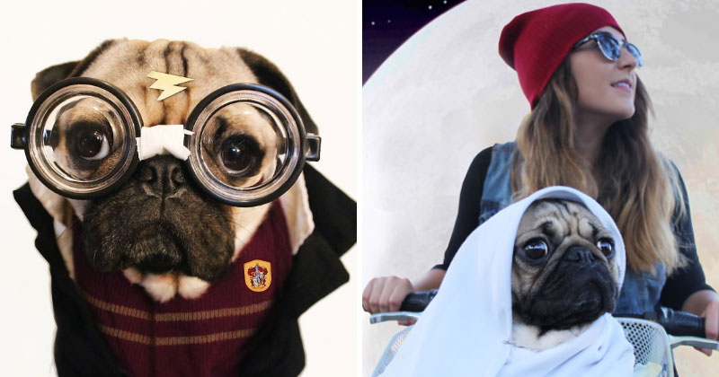 Doug The Pug Does Halloween Better Than You