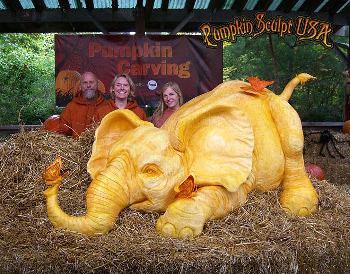 900lb Pumpkin Carving Raises Awareness Of Elephant Killings