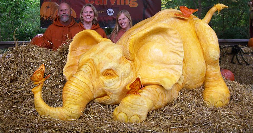 900lb pumpkin carving raises awareness of elephant for How to carve an elephant on a pumpkin