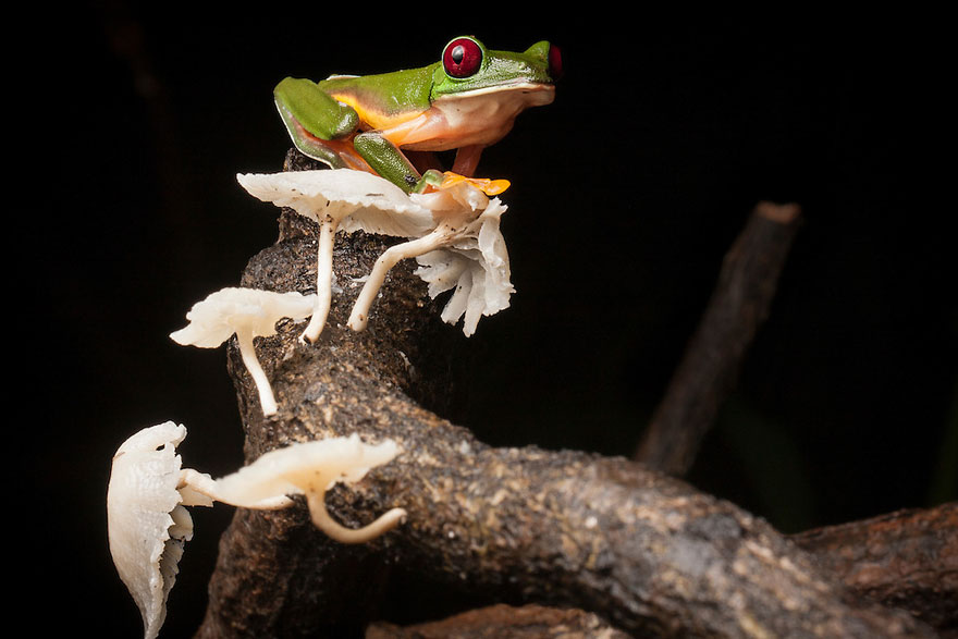 frog-photography-robin-moore-2
