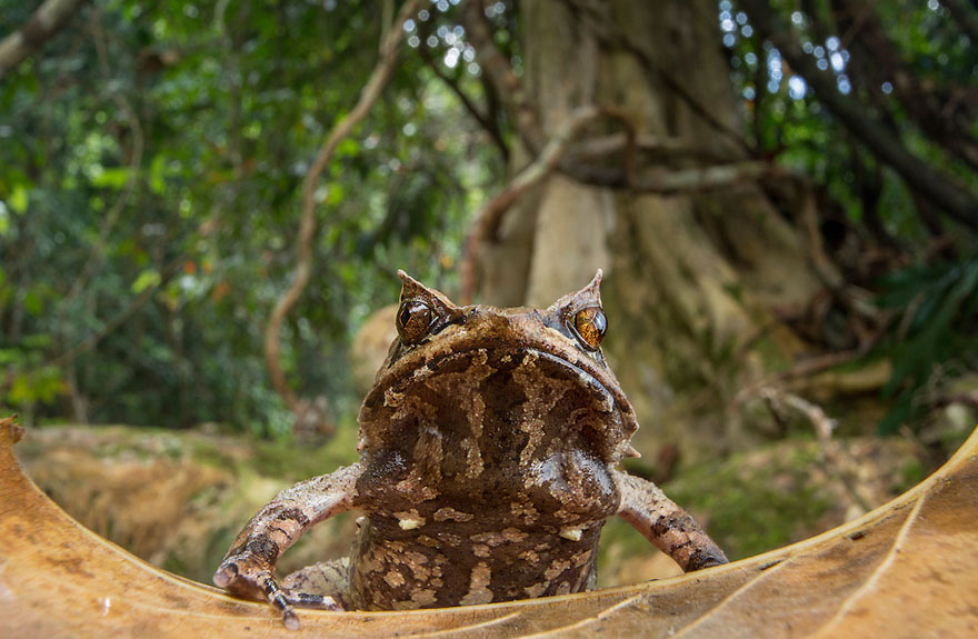 frog-photography-robin-moore-3