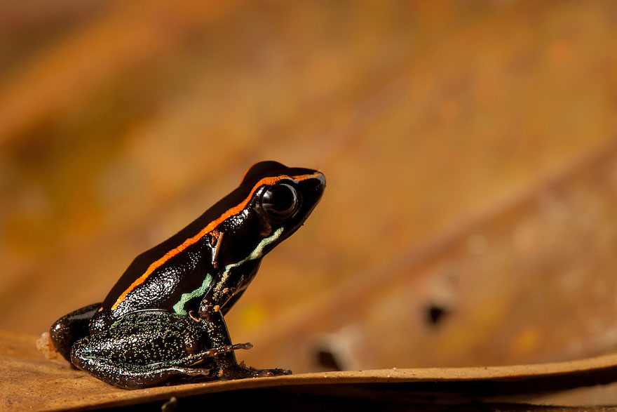 frog-photography-robin-moore-5