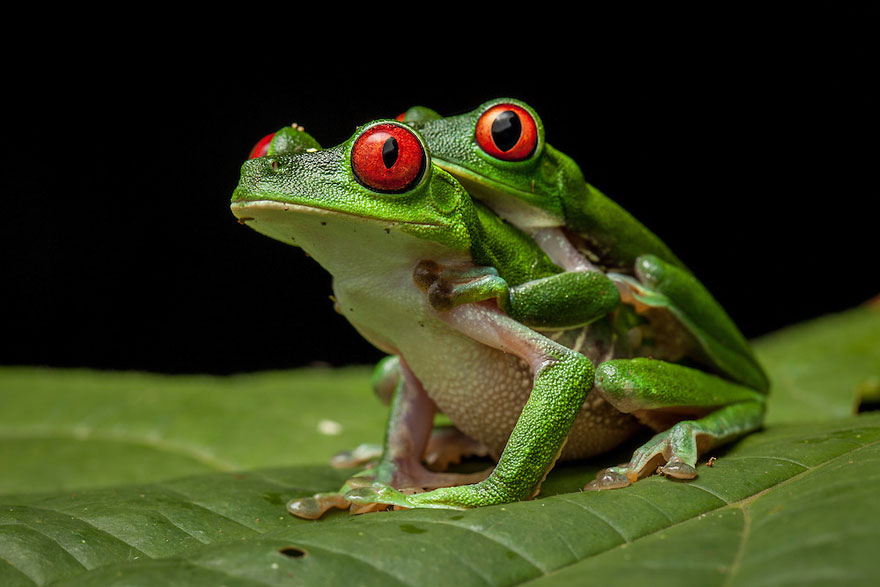 frog-photography-robin-moore-6