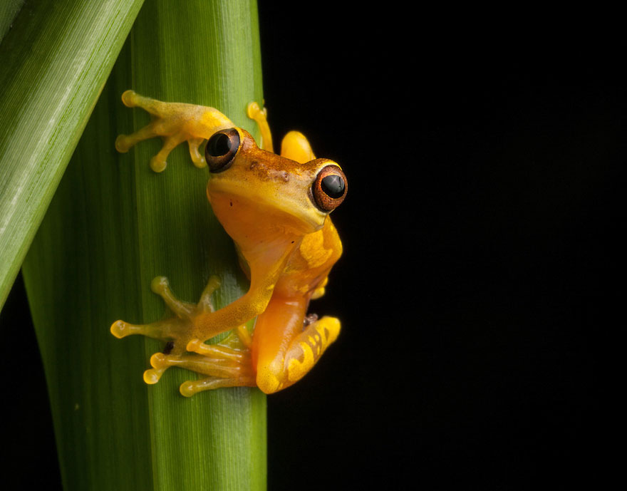 frog-photography-robin-moore-8