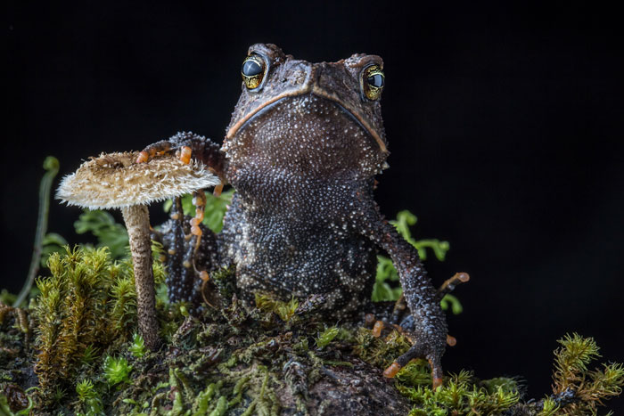 In Search Of Lost Frogs: My Epic Quest To Photograph The Rarest Frogs In The World