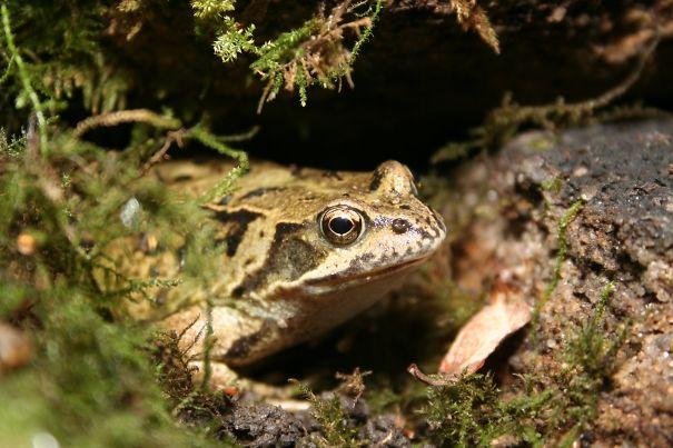 Frog In Back Garden Wall