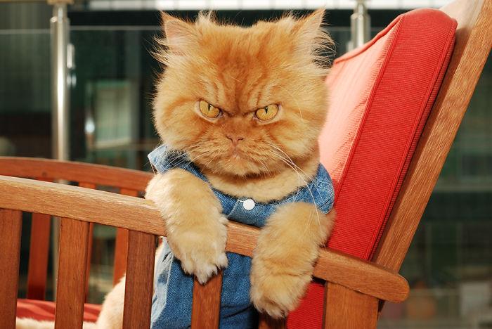 Garfi кот в одежде