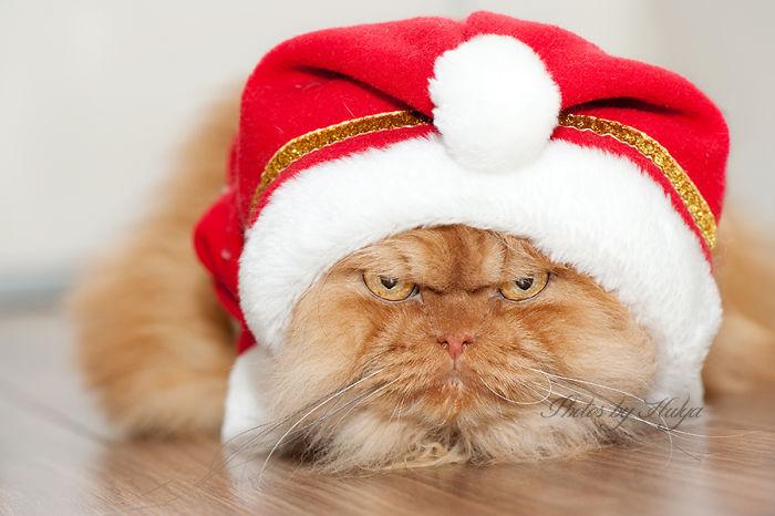 Meet Garfi, The World's Angriest Cat