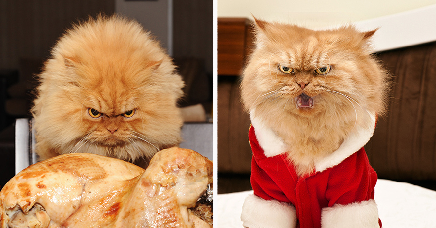 Meet Garfi, The World's Angriest Cat