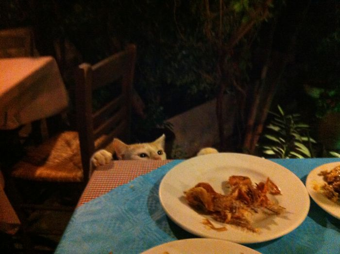 In A Greek Restaurant, One Second Before The Cat Snatched The Fishbones…