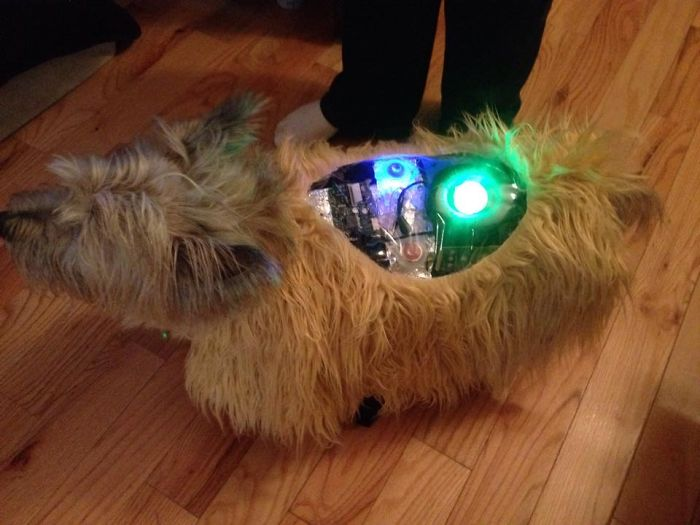 Bionic Dog