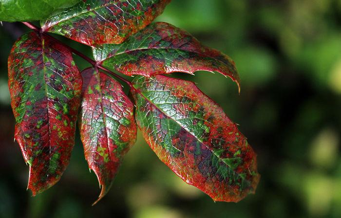 Autumn Spots