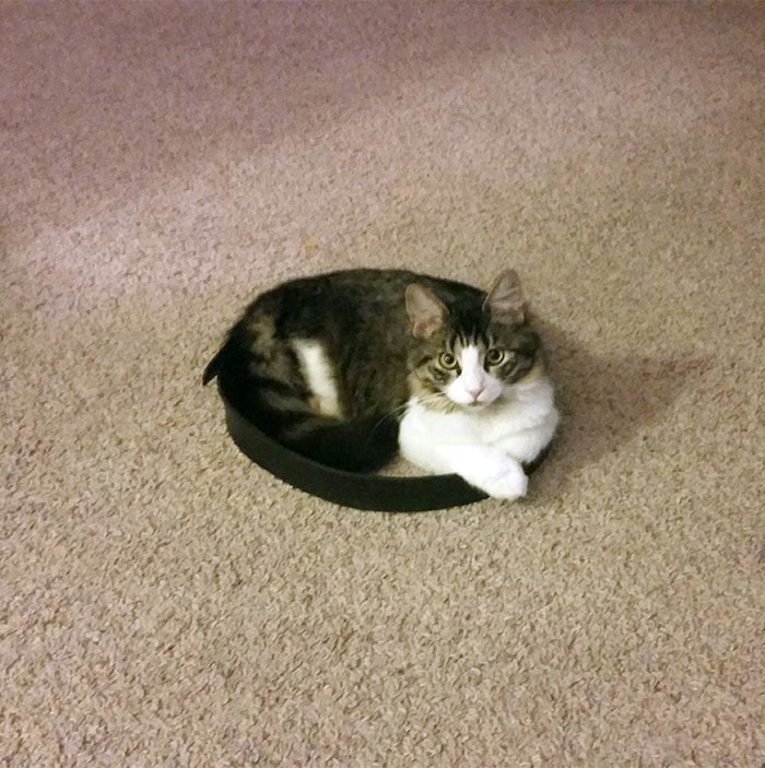 how-to-trap-a-cat-circle-13