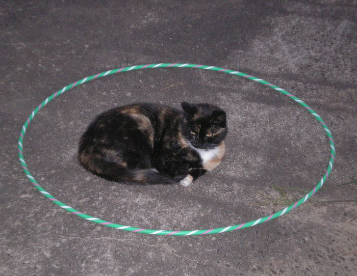 how-to-trap-a-cat-circle-14