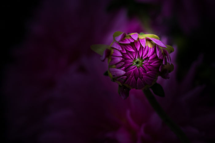 Unique Flower Photography Unlike Anything You've Seen Before!