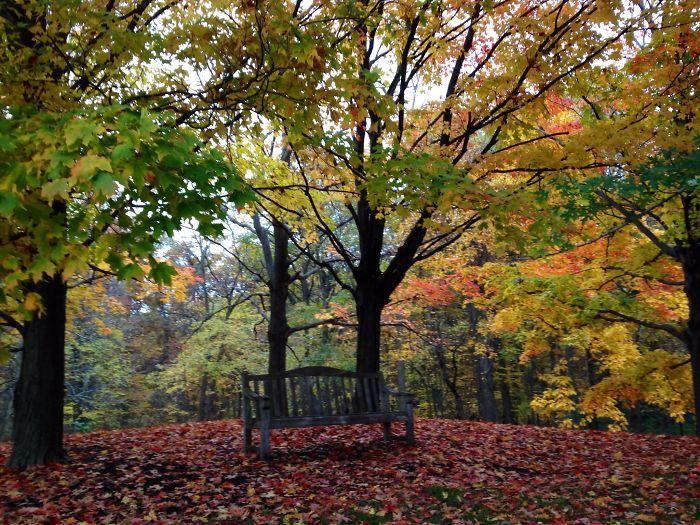 Fall At Chicago Botanic Garden