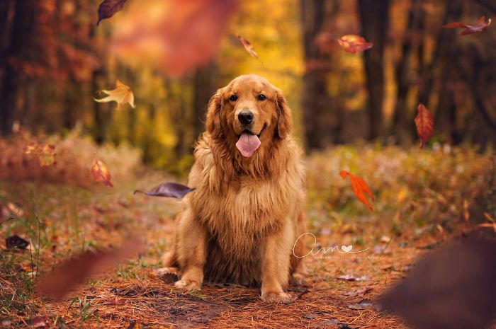 Fall Golden