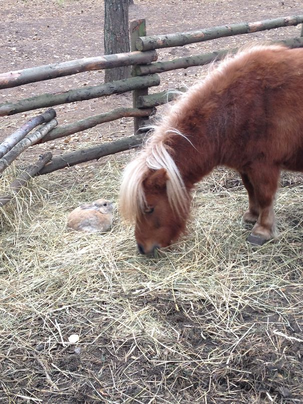 This Cute Couple Sharing Hay On A Cold Autumn Day