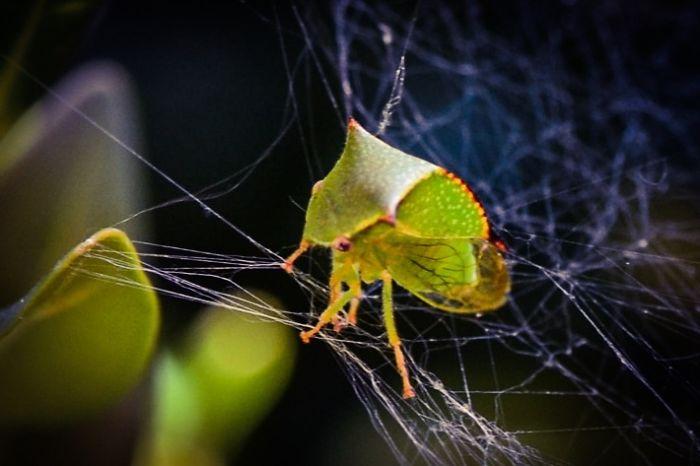 Green Leaf Looking Bug