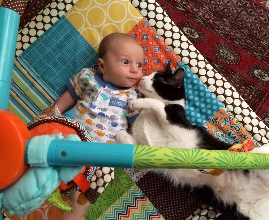 Play Cat On The Play Mat
