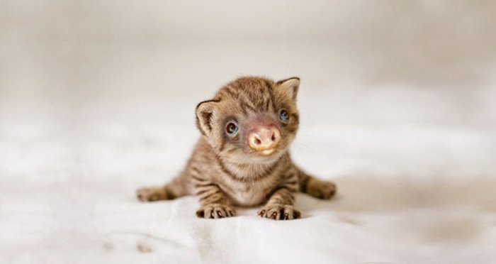 kittens-sloths-combined-slittens-37