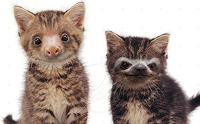 Slittens: Kittens And Sloths Together At Last