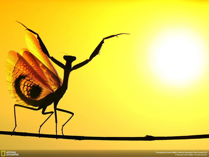 national-geographic-photo-contest-2014-photography-11