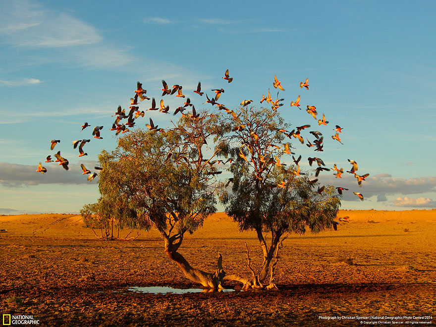 national-geographic-photo-contest-2014-photography-14